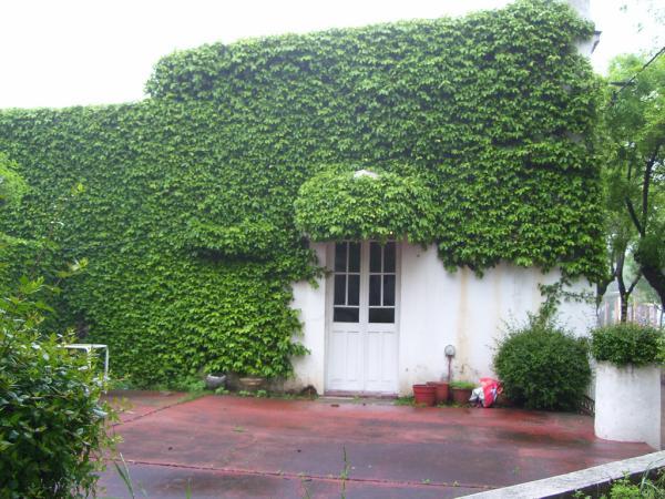 Fachadas de casas con enredaderas fachadas de casas for Arboles de jardin que den sombra
