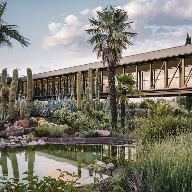 El exterior rodeado de cactus